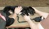 bruiser (rescue puppy)_00004