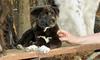 bruiser (rescue puppy)_00008
