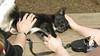 bruiser (rescue puppy)_00003