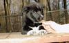 bruiser (rescue puppy)_00005