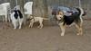simba (puppy), maddie, Marley_00001