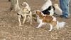 simba (puppy), Polly_00002