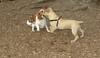 simba (puppy), Polly_00006