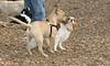 simba (puppy), Polly_00001