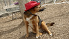 Lexi (red hat)_00003