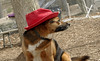 Lexi (red hat)_00002