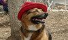 Lexi (red hat)_00001