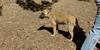 bentley (puppy)_003