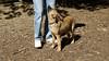 bentley (puppy)_001