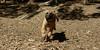 bentley (puppy)_002