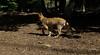 bentley (puppy)_006