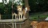 dakota, oscar (puppy), Chloe_002