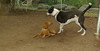 Cleo (puppy), Jack (boy pup)_004