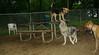 Cheyenne (new pup), Maddie_005