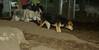Cheyenne (new pup), Maddie_003