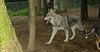Cheyene (new pup girl)_001