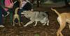 Cheyenne (new pup), Maddie_001