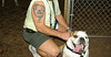 Buddy bulldog tatoo_003