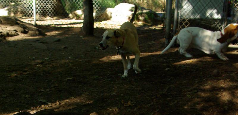 dixie (puppy girl)_001