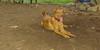 Doug (7mo   pup new)_003