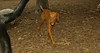 Cleo (6mo  puppy girl)_003