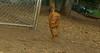 Cleo (6mo  puppy girl)_002
