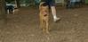 Doug (7mo   pup new)_001