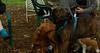 Pepper (plott hound), Cleo (viszla)_001