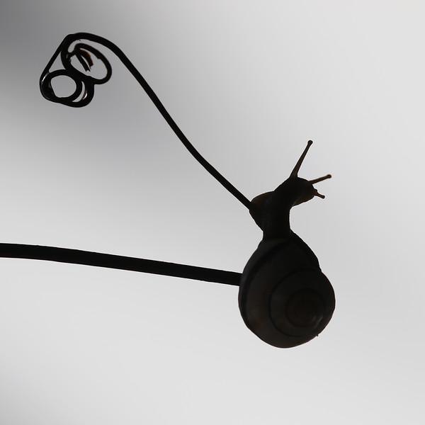 Germain-Lachance-Excellence-Silhouette jpg