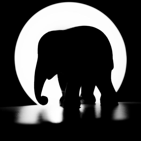 Elephant Shade