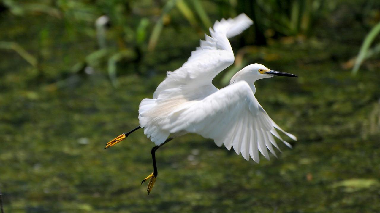 High Island birding 383 a 16x9