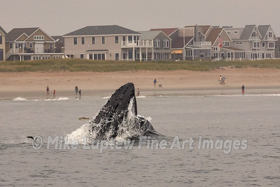 Beachside View of Whale