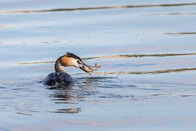 Bonne prise ! (Good catch !)