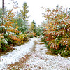 Early October Snow 1