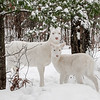 Snow Angels  3