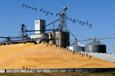 Corn is piled high outside the Heart of Iowa Co-op near Nevada, Iowa, Monday October 17, 2010.