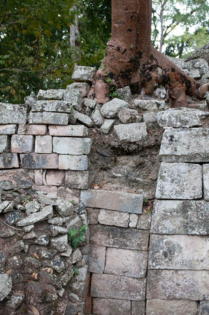After the fall of the Mayan civilization, it was not long before the trees and jungle reclaimed their beautiful stone-works.  Here, you can see how the roots of the trees tear into the ruins showing how transient even the strongest man-made works of stone are.