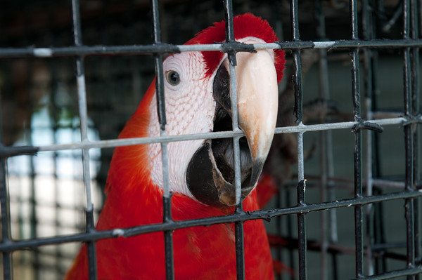 """This parrot really clearly wanted to say : """"Hello""""."""