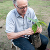 Gary Guittard of Guittard Chocolate shows his practiced-hand when it comes to grafting cacao.