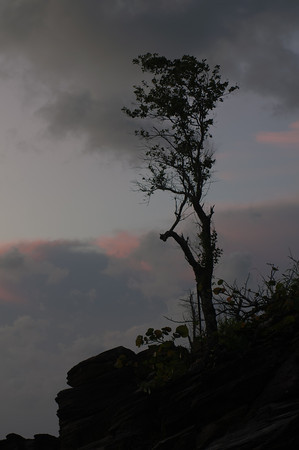This lonely tree climbs out of rocky crag in order to be the first and last to see the sun in the morning and the evening.