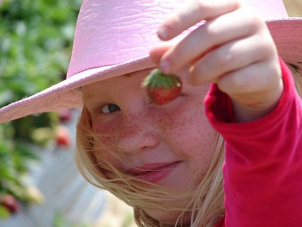 strawberry sharon
