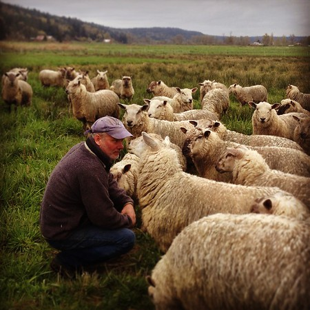 Lamb Shepherd Jeff Rogers