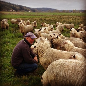 Lamb Shepherd Jeff Rogers