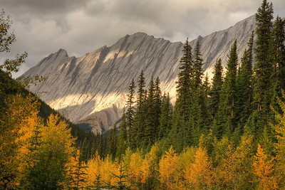 Fall colors along the Icefields Parkway - late afternoon