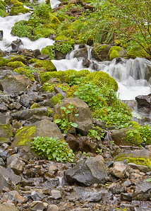 downstream of the Wahkeena Falls