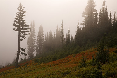 Misty afternoon from the Alta Vista Trail