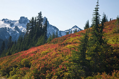 Tatoosh Range from the Skyline Trail
