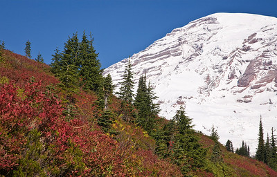 From the Alta Vista Trail in Mt Rainer