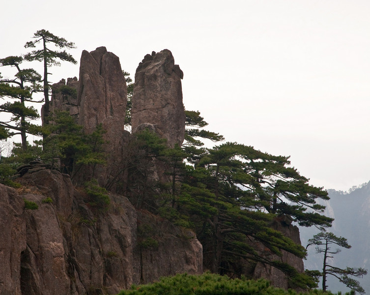 Huangshan Pine (Pinus hwangshanesis).  Many pines in the area are over a hundred years old.