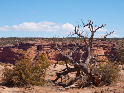 Canyon De Chelly (March, 2010)